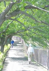 町田樹 画像45
