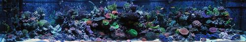 Vivid Aquarium