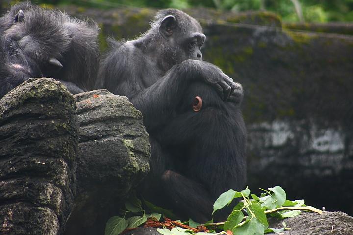 台北木柵動物園0054