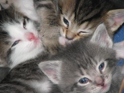 Kittens 5-16-10 006
