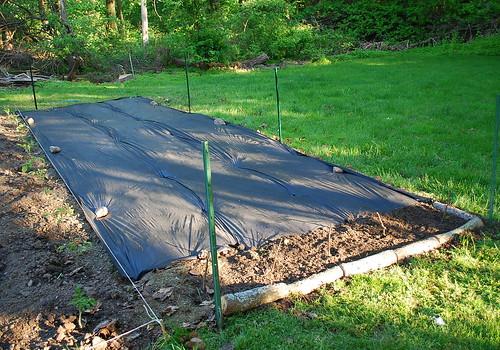 expanding garden 4