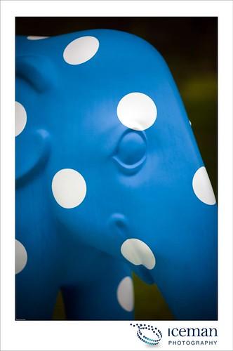 001-Spotty