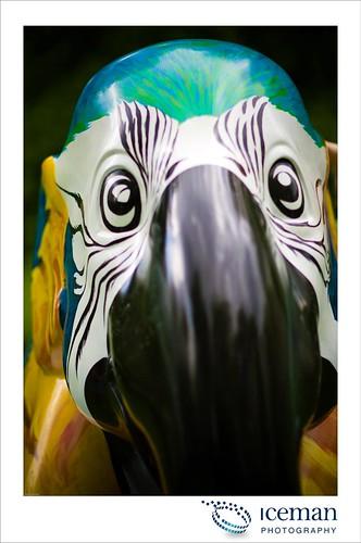 029-Blue Macaw