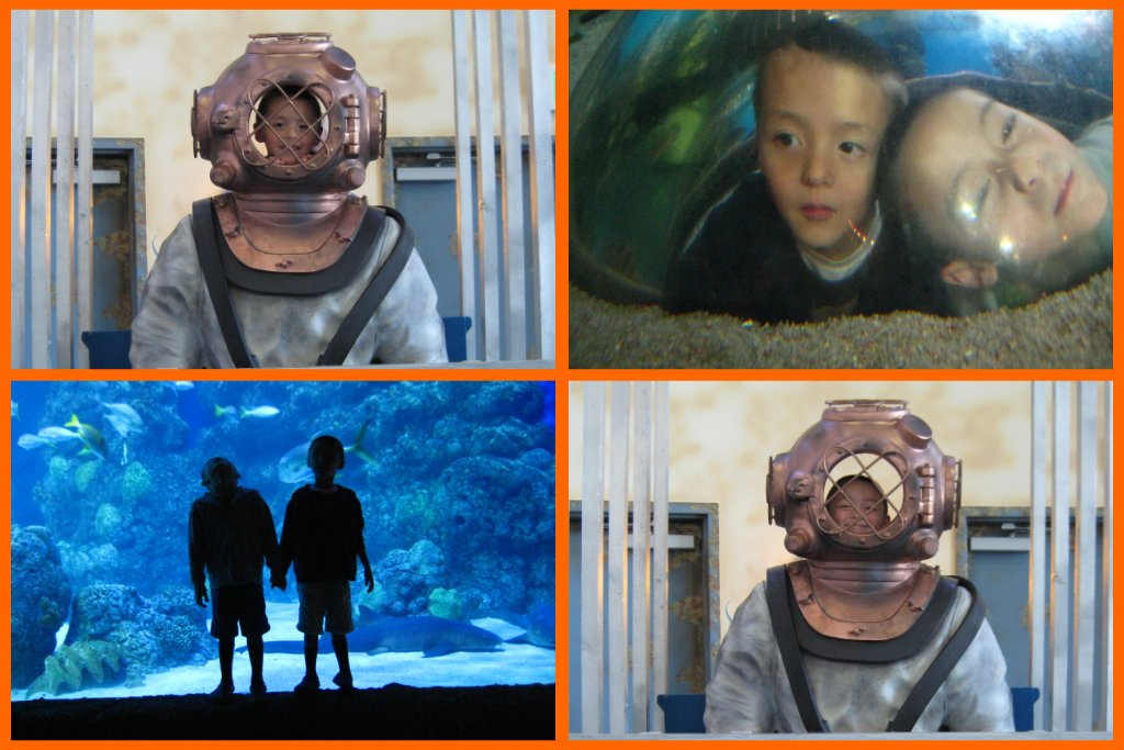 Aquarium_Collage