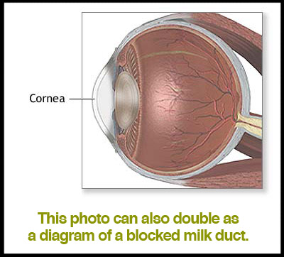 cornea-iambossy