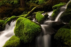 olympic odyssey (Dene' Miles) Tags: world pictures camera wood longexposure morning travel original trees usa art tourism nature water rain creek forest landscape creativity outdoors photography moss spring interesting rainforest scenery rocks stream flickr unitedstates artistic photos hiking tripod creative scenic picture surreal olympicpeninsula tourist explore photograph cascades pacificnorthwest northamerica destination dreamy flowing washingtonstate polarizer popular olympicnationalpark westcoast frontpage eyecandy solduc 2010 olympicmountains naturesart olympicnationalforest olympicmtns nikond90 denemiles