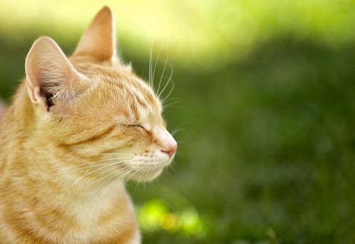[フリー画像] 動物, 哺乳類, ネコ科, 猫・ネコ, 201006021100