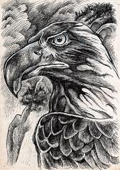 Aigle (monsieur-g) Tags: marseille rv herve germain hervgermain hervegermain