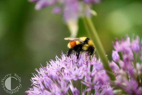 145-big bee