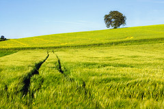 treescape (Dennis_F) Tags: blue sky tree green colors field germany landscape deutschland sony feld traces himmel sigma grn blau dslr 50 baden karlsruhe landschaft baum treescape 50mmf14 farben sigma50mm weingarten sigmalens a700 kraichgau festbrennweite sonyalpha sonydslr jhlingen sigma5014 sigma50mmf14 alpha700 sonya700 sonyalpha700 dslra700 sigmaobjektiv