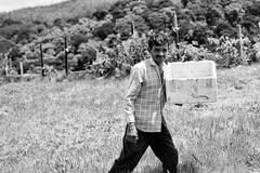 (aznym) Tags: trip family holiday man strawberry srilanka sell collect wesak nuwaraeliya xion aznym 2010052817230