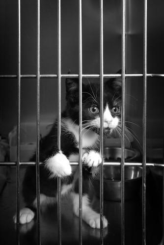 Jail Kitty