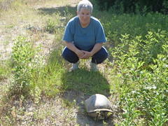 Carolyn and the gopher