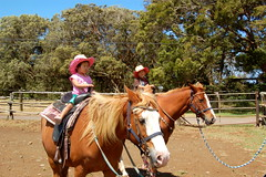 Horseback Riding in Waimea