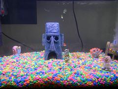 SpongeBob Aquarum 02 (Thagirion3) Tags: plankton spongebobaquariumthanksandy squidwardgoldfish