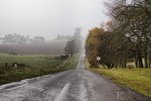 Wet Winter Lane