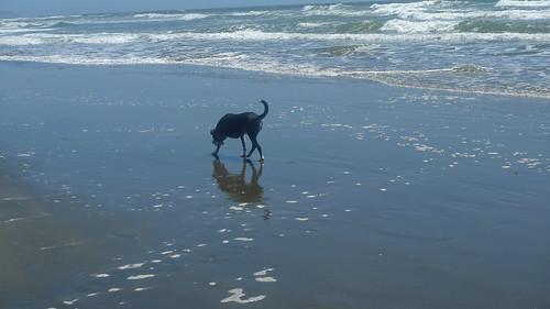 Mikey at Ocean Beach