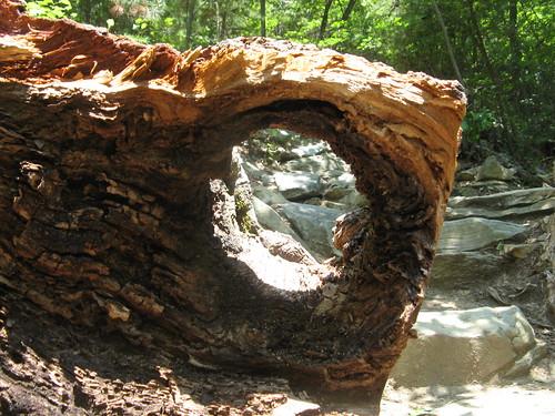 Hole, log