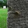 Peur / Fear (Kap-) Tags: canada cemetery spider tombstone québec araignée tombe cimetière pierretombale beautifulmonsters