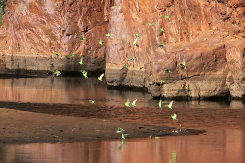 Trephina Gorge - East MacDonnell Ranges