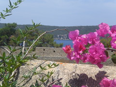 A visit to Pylos and the castle (Gregelope) Tags: flowers colour nature beautiful architecture harbour greece views ellada serenitynow messinia pelopponese flowerpicturesnolimits