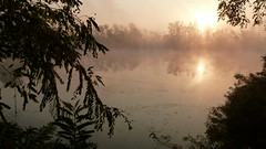 Alba autunnale sul Po (BORGHY52) Tags: italy nature fog river alba fiume piemonte po nebbia autunno riflessi carignano