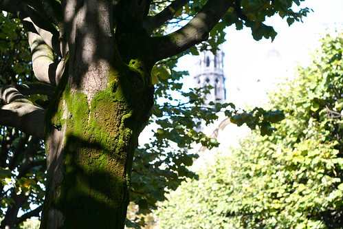 Moss behind Notre Dame