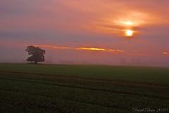 Majestic Morning (jactoll) Tags: morning autumn mist tree misty fog rural landscape oak nikon mood farmland arrow nikkor 1001nights warwickshire vr d60 alcester warks 1685mm flickraward 1001nightsmagiccity jactoll