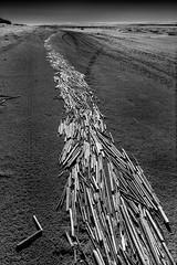 Beach road (Janne Herva) Tags: bw blackandwhite hiekka kesä landscape maisema merimaisema mustavalko rannikkomaisema reed ruoko sand sealandscape shore summer