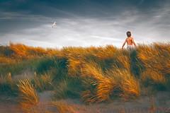 Stout-hearted (Ans van de Sluis) Tags: portrait child people ansvandesluis surreal art fineart boy landscape nature dunes dune clouds sunset freedom stouthearted free grass