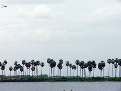 thirukurankudi lake (wilsonepaul) Tags: india lake wings picnic tour tirunelveli tamil tamilnadu southindia kulam vallioor secnery nellai nambimalai wilsonepaul
