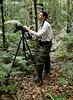 Rainforest birding, Bram Demeulemeester. (Bram Demeulemeester - Birdguiding Philippines) Tags: indonesia sulawesi lorelindunationalpark bramdemeulemeester rainforestbirding