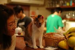 害羞 (Danny Chou) Tags: classic sc cat voigtlander snap epson 貓 rd1 極簡咖啡 35mmf14 害羞 台北市的師大夜市