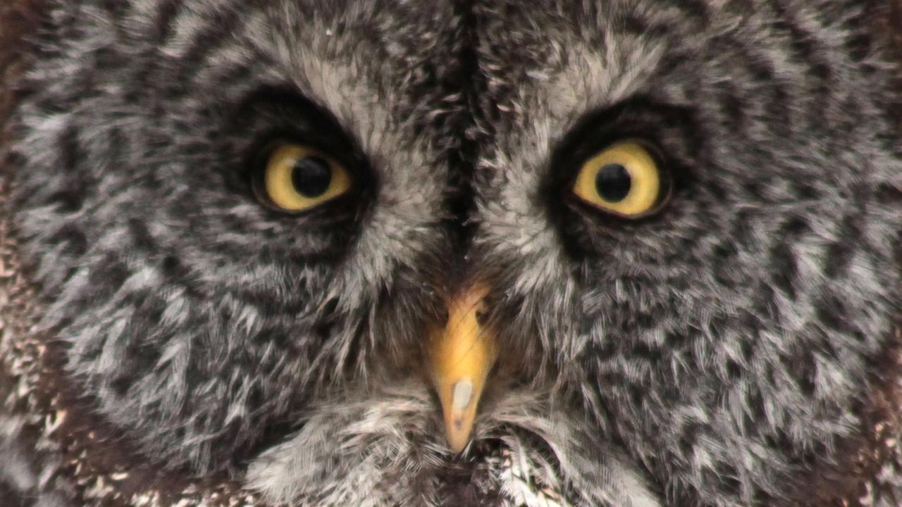 Owl Farm Tour