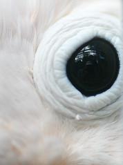 288.365 - Refuge (Universal Stopping Point) Tags: camera pink black reflection bird eye pale exotic panama cockatoo wildliferefuge chiriqui boquette   croppedbrightenedfilllightvibrancy