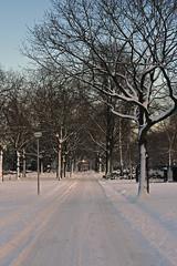 Parklaan with snow (c.oosterbos) Tags: snow roosendaal parklaan