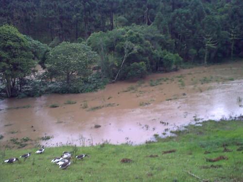 o rio multiplicado