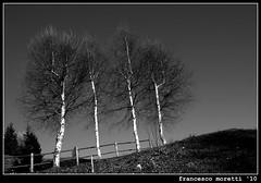 mountain life: 4 trees (francesco12corde) Tags: francesco moretti