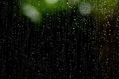 075. Dark and Dismal (prenetic) Tags: white black cold green window water glass leaves rain dark neck campus outside outdoors washington office back leaf drops bush flora afternoon looking dismal cloudy ill microsoft redmond raindrops aches sick bushes liquid dripping stiff headache pains