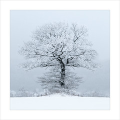 LONESOME TREE (fuchsphoto) Tags: blue schnee winter cold tree fog cool nebel natur foggy single highkey blau rime kalt homepage baum einsam reif toning lonesome weis neblig einzeln abgeschieden hoartfrost tonung