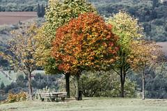 Bologna - Prati di Mugnano (Lorenzo Baldini) Tags: autumn trees art nature alberi artwork hill natura autumncolors bologna autunno collina coloridellautunno finework