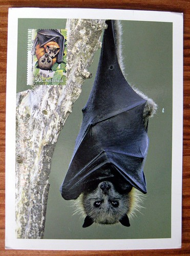Australian flying fox bat postcard with postage