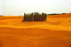 Cypress Hill (Mavroudakis Fotis) Tags: sunset italy italia tramonto hill tuscany toscana colle cipressi paessagio ysplix