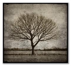 Lone Tree (cas lad) Tags: tree mono post single lad processed cas lonetree