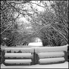 dana hilliot - the heaven door