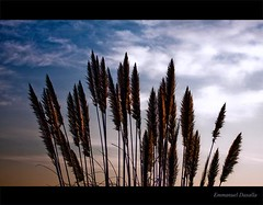 Sky (Emmanuel_D.Photography) Tags: california morning sky cloud grass sunrise canon 70200 astig losangelescalifornia f4l 50d emmanueldasalla