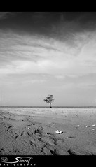 Lonely..B&W.. (Shrf AlMalki..) Tags: tree nature death desert photos lonely minimalism     shrf  almalki