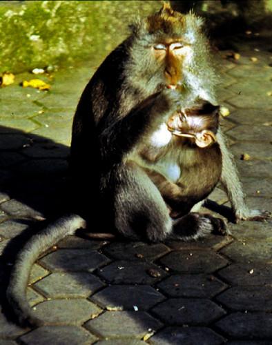 Bali: Foresta delle scimmie