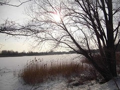 A winter walk around the lake (lady black) Tags: winter sun lake snow tree ice reed magicmoments naturesfinest spygame theunforgettablepictures platinumheartaward