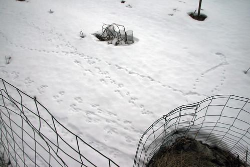 garden tracks